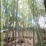 竹を活かす仕事