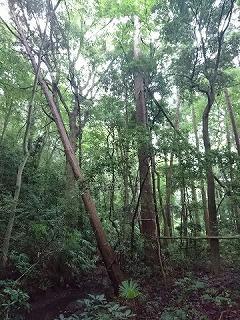 早春の森で…生木でDIYを楽しもう!