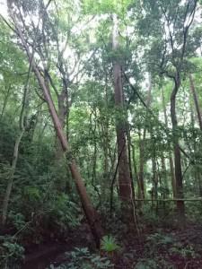 秋の森で心も体もゆったりな1日を♪【開催時間変更】