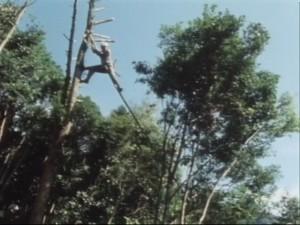 西米良木から木へ01