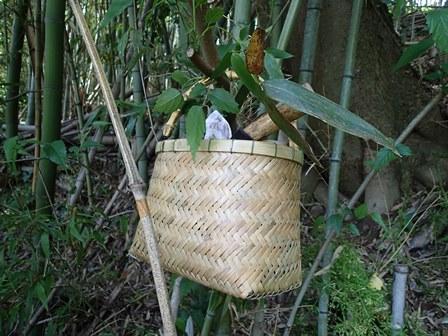 竹を活かすヤマ仕事 5月