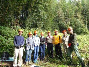 11月の竹林整備