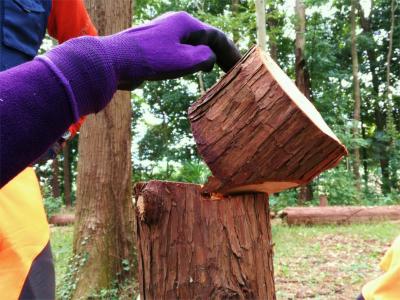 森づくり活動レベルアップ研修step2審査[3日目]~折れ曲がり線・ツルづくり