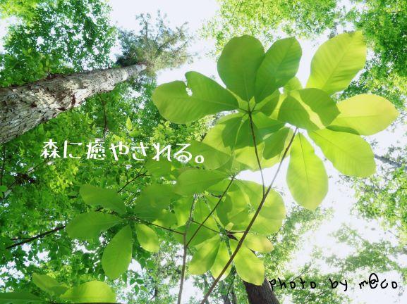 川井の森でハーブガーデンを育む(屋外編)